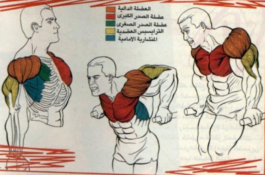 مين بيلعب التمرين دة وعارف قيمته وعارف فوايدة الكتير  Dips_exercise